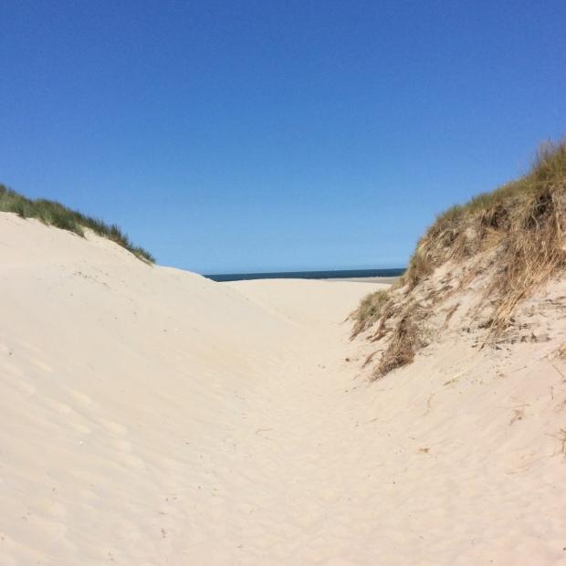 dunen-zeeland-2015-img_0955